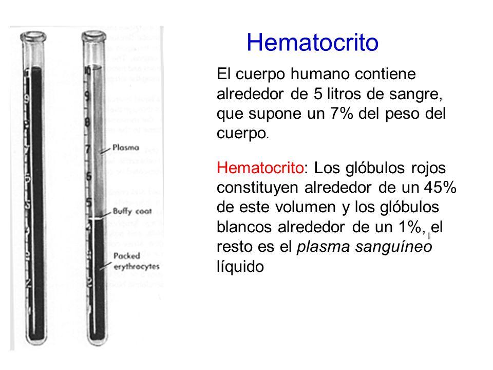 Hematocrito El cuerpo humano contiene alrededor de 5 litros de sangre, que supone un 7% del peso del cuerpo.