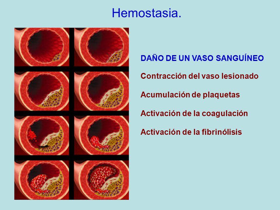Hemostasia. DAÑO DE UN VASO SANGUÍNEO Contracción del vaso lesionado