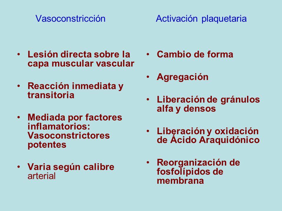 Vasoconstricción Activación plaquetaria