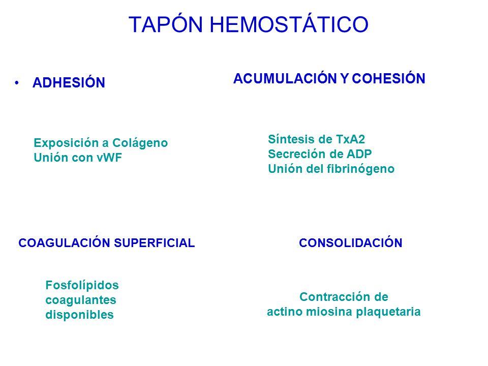 actino miosina plaquetaria