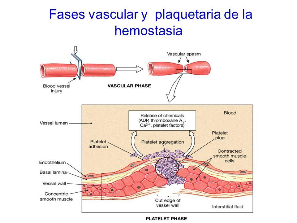 Fases vascular y plaquetaria de la hemostasia