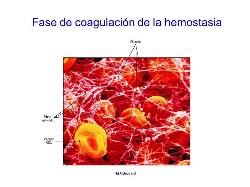 Fase de coagulación de la hemostasia