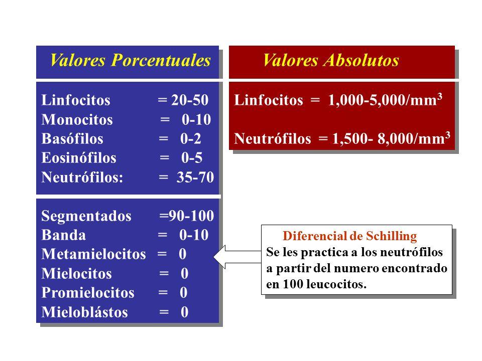 Valores Porcentuales Linfocitos = 20-50 Monocitos = 0-10