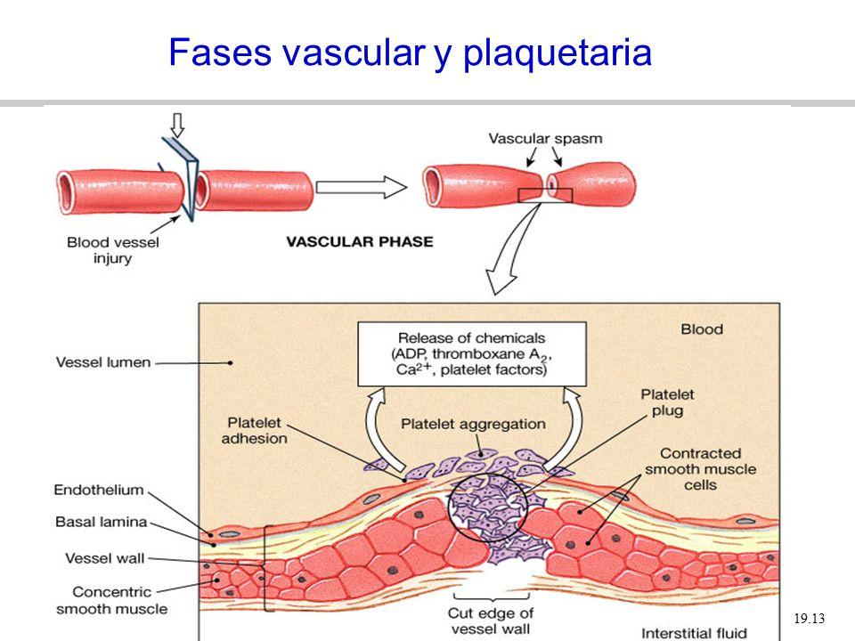 Fases vascular y plaquetaria
