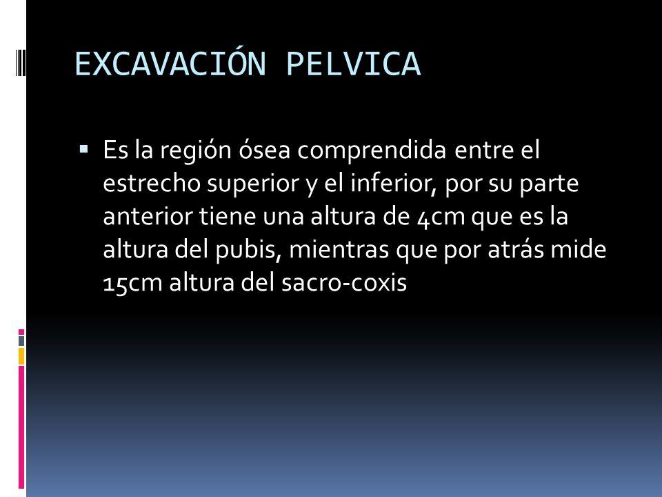 EXCAVACIÓN PELVICA