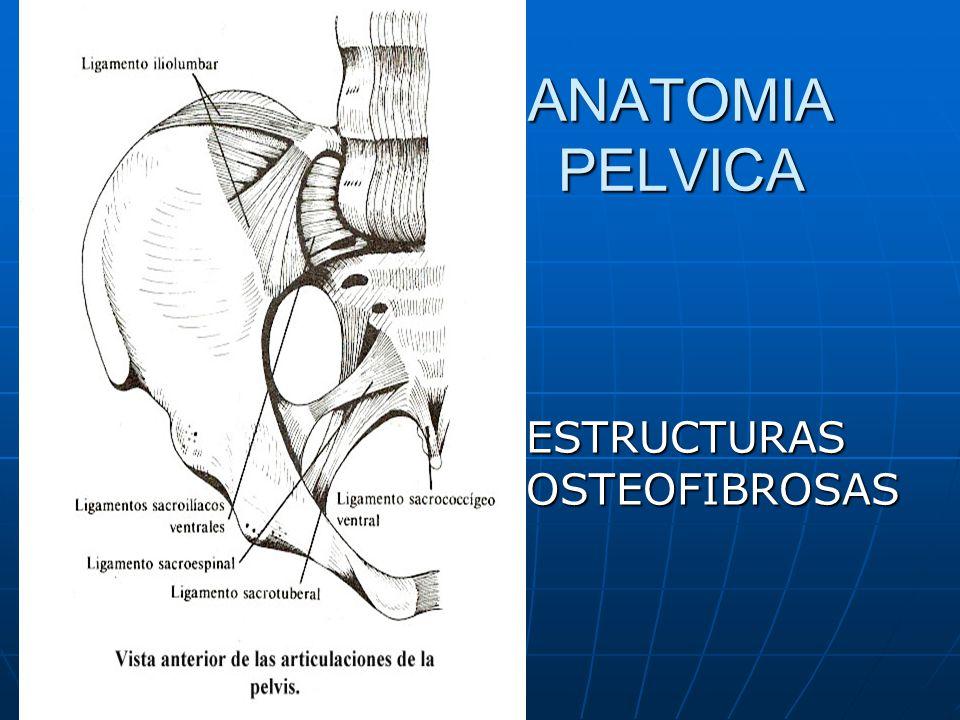 ANATOMIA PELVICA ESTRUCTURAS OSTEOFIBROSAS