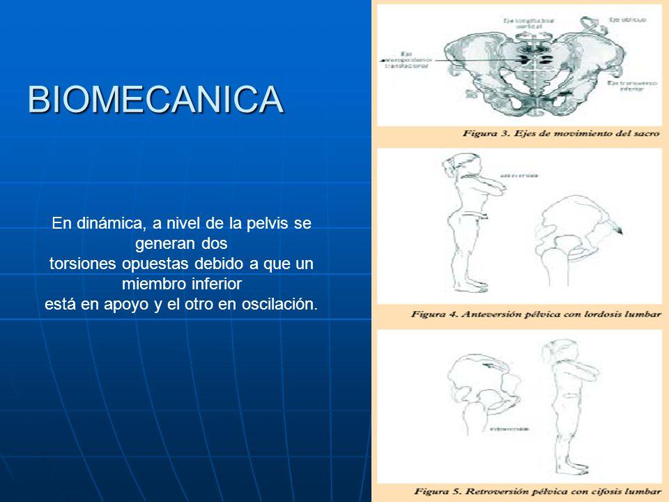 BIOMECANICA En dinámica, a nivel de la pelvis se generan dos