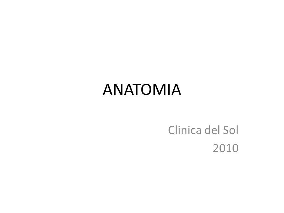 ANATOMIA Clinica del Sol 2010