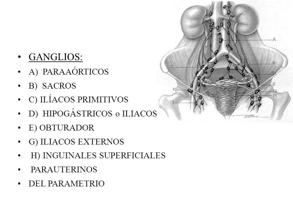 GANGLIOS: A) PARAAÓRTICOS B) SACROS C) ILÍACOS PRIMITIVOS