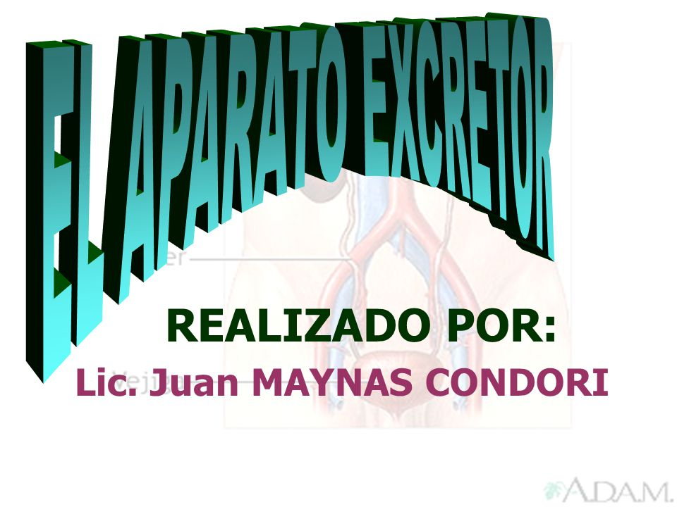 REALIZADO POR: Lic. Juan MAYNAS CONDORI EL APARATO EXCRETOR