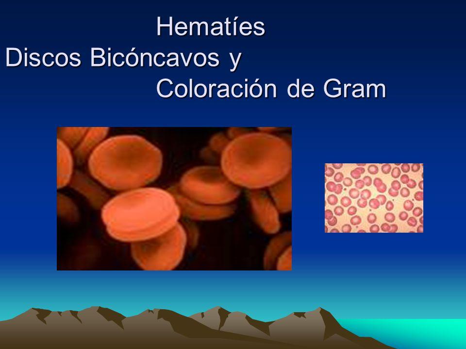 Hematíes Discos Bicóncavos y Coloración de Gram