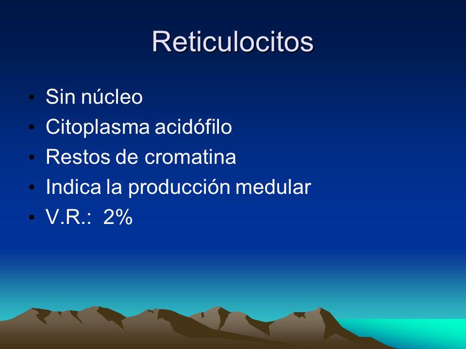 Reticulocitos Sin núcleo Citoplasma acidófilo Restos de cromatina