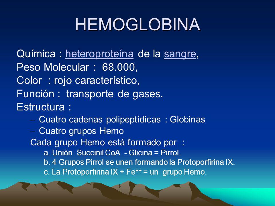 HEMOGLOBINA Química : heteroproteína de la sangre,