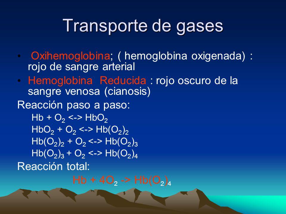 Transporte de gases Oxihemoglobina; ( hemoglobina oxigenada) : rojo de sangre arterial.