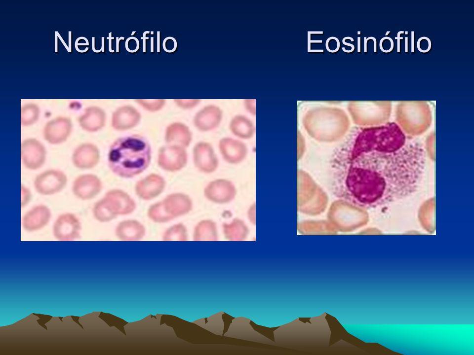 Neutrófilo Eosinófilo