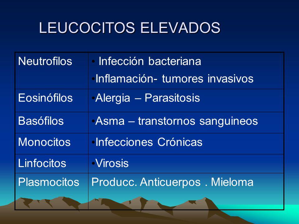 LEUCOCITOS ELEVADOS Neutrofilos Infección bacteriana