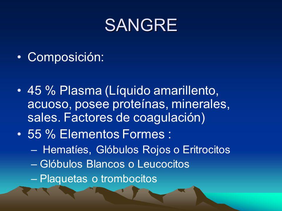 SANGRE Composición: 45 % Plasma (Líquido amarillento, acuoso, posee proteínas, minerales, sales. Factores de coagulación)
