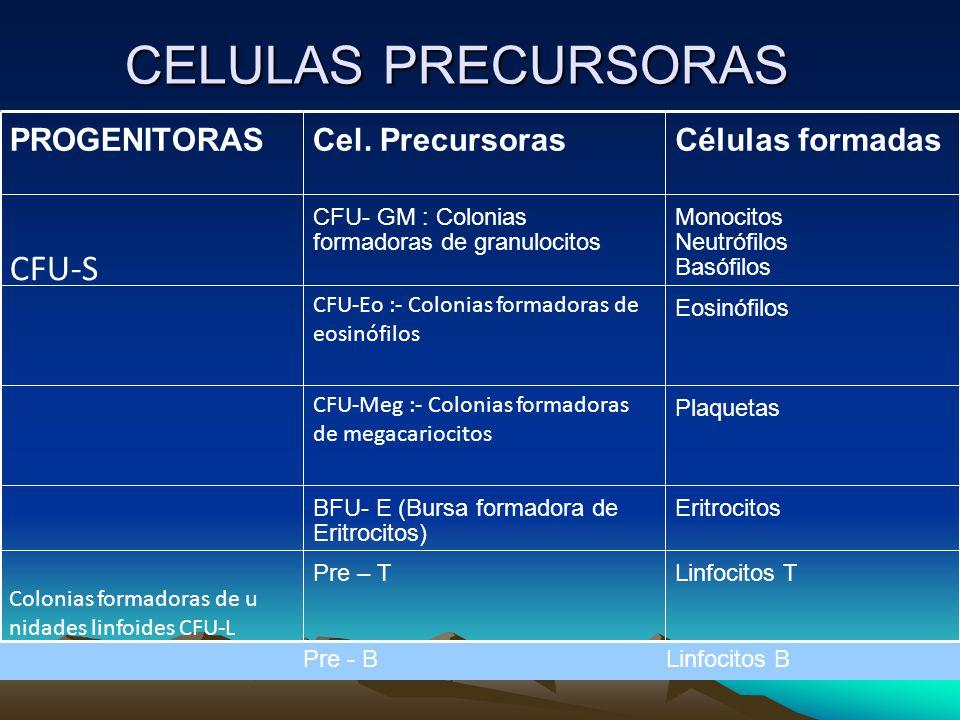 CELULAS PRECURSORAS CFU-S PROGENITORAS Cel. Precursoras