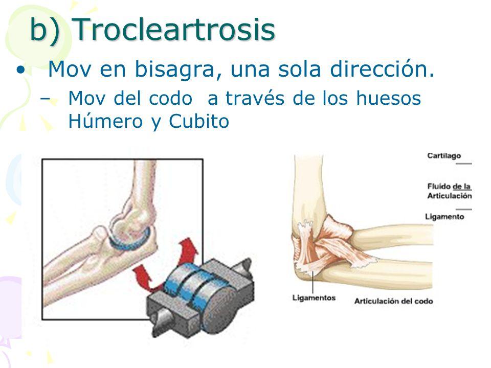 b) Trocleartrosis Mov en bisagra, una sola dirección.