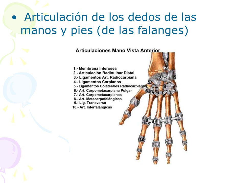 Articulación de los dedos de las manos y pies (de las falanges)