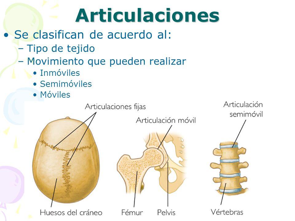 Articulaciones Se clasifican de acuerdo al: Tipo de tejido