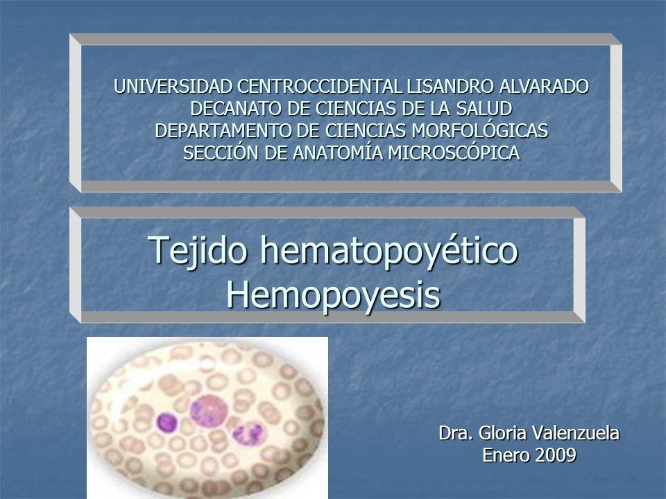 Tejido hematopoyético Hemopoyesis