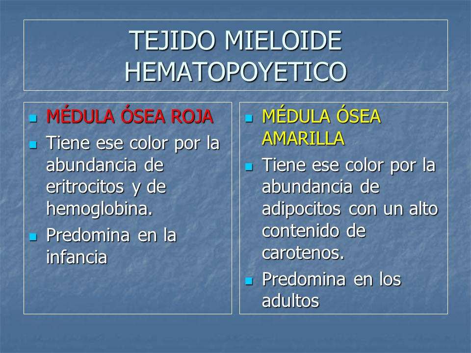 TEJIDO MIELOIDE HEMATOPOYETICO