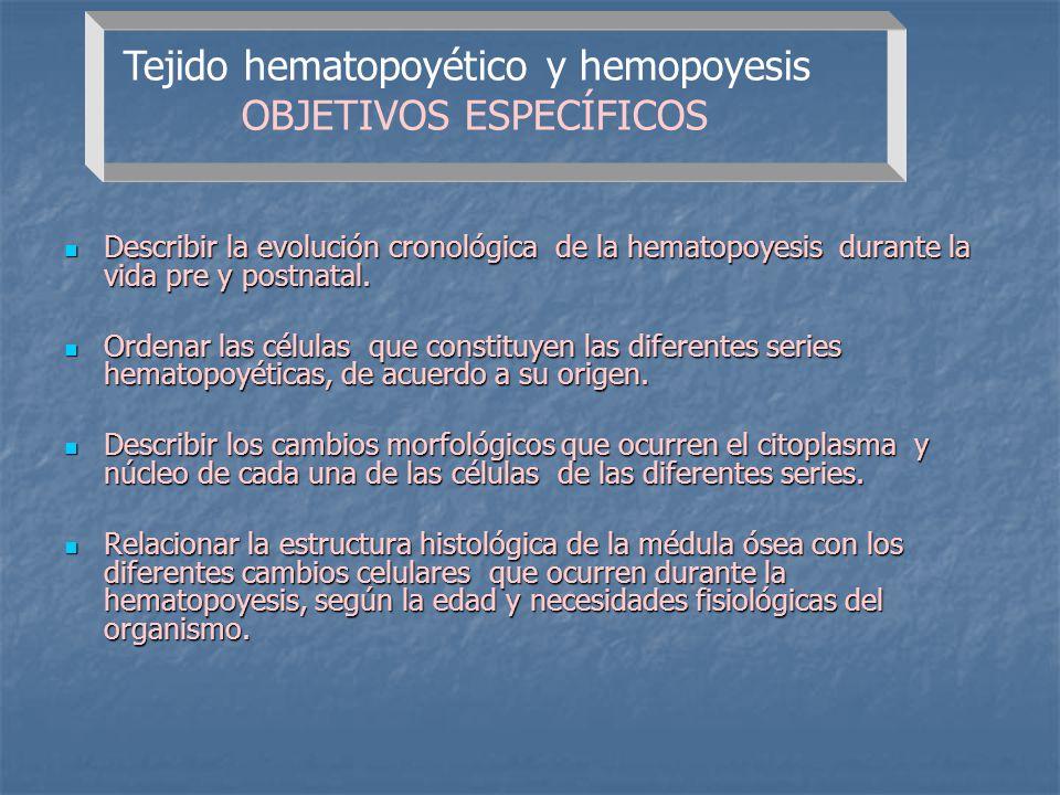 Tejido hematopoyético y hemopoyesis OBJETIVOS ESPECÍFICOS