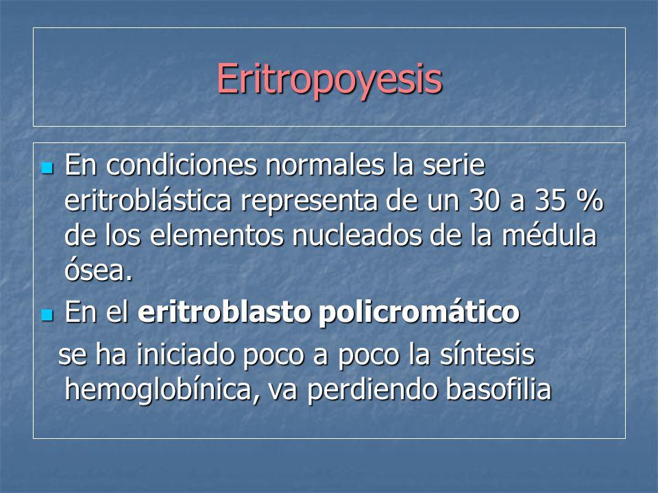 Eritropoyesis En condiciones normales la serie eritroblástica representa de un 30 a 35 % de los elementos nucleados de la médula ósea.