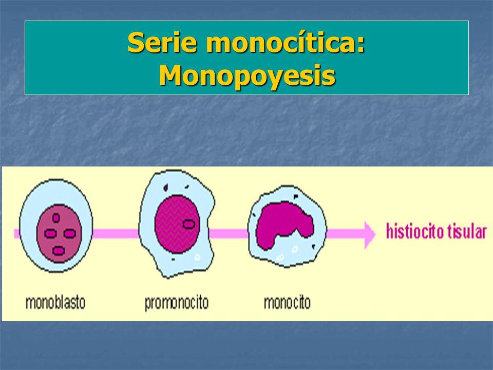 Serie monocítica: Monopoyesis