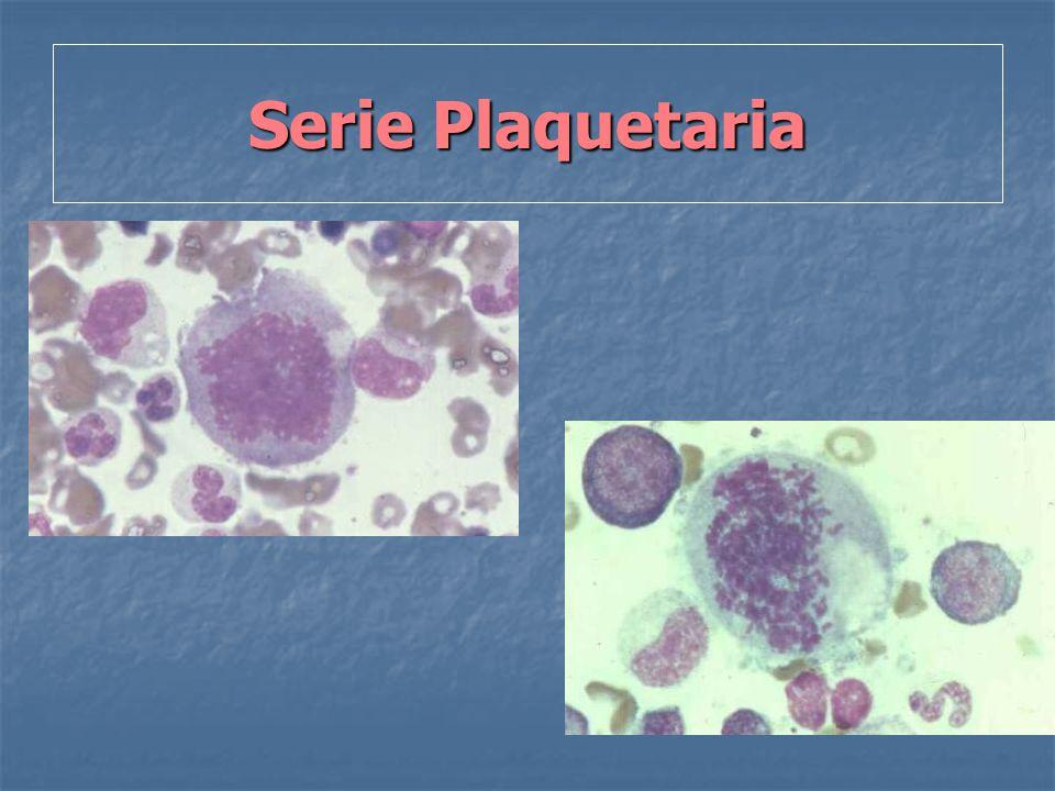 Serie Plaquetaria