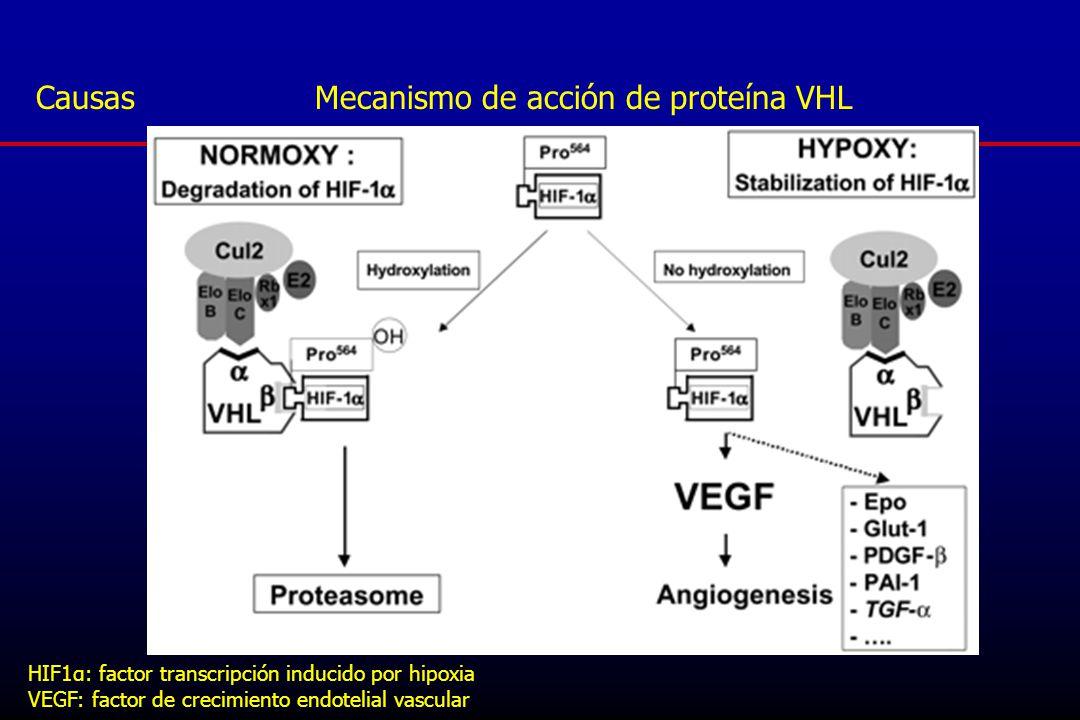 Causas Mecanismo de acción de proteína VHL