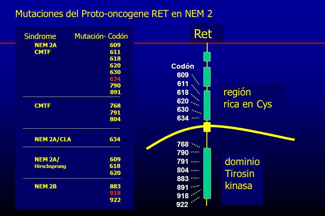 Ret región rica en Cys dominio Tirosin kinasa