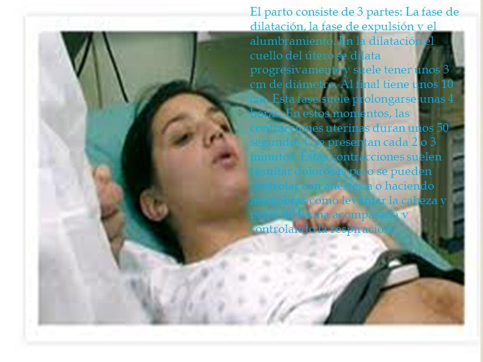 El parto consiste de 3 partes: La fase de dilatación, la fase de expulsión y el alumbramiento.