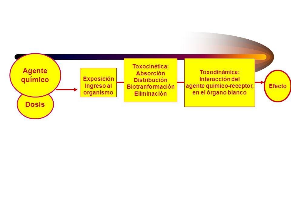agente quimico-receptor,