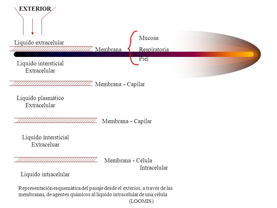 EXTERIOR Liquido intersticial Extracelular Liquido extracelular