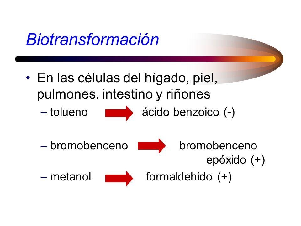 Biotransformación En las células del hígado, piel, pulmones, intestino y riñones. tolueno ácido benzoico (-)