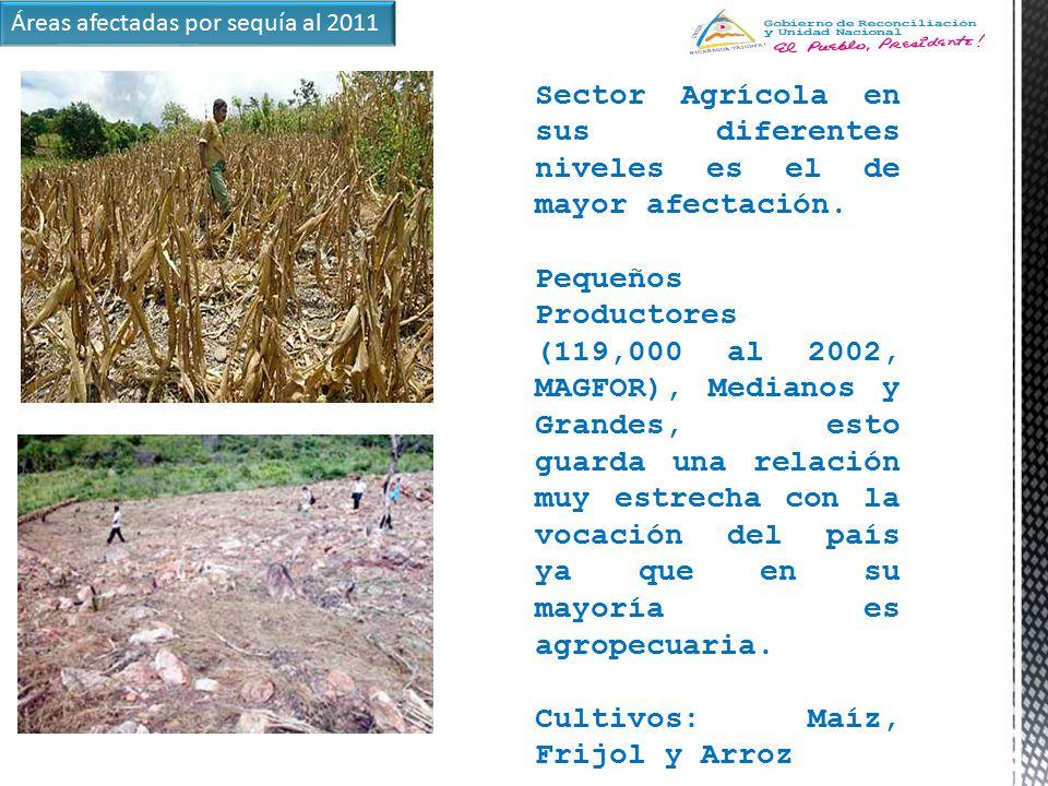 Sector Agrícola en sus diferentes niveles es el de mayor afectación.