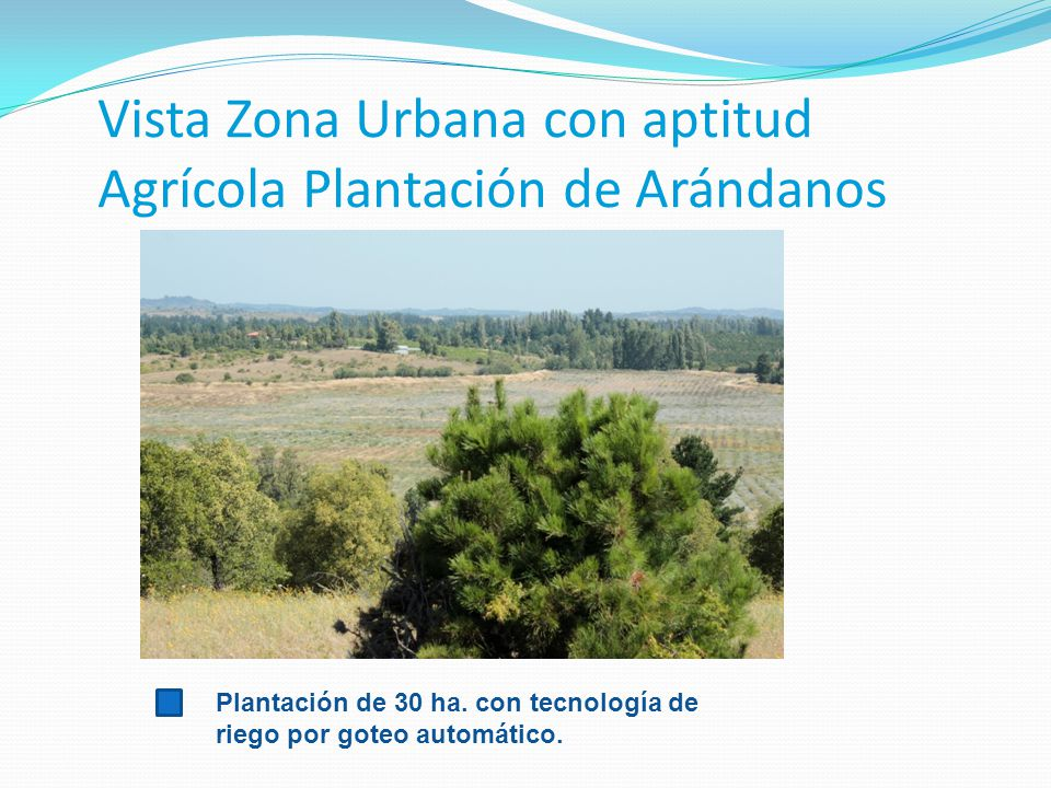 Vista Zona Urbana con aptitud Agrícola Plantación de Arándanos