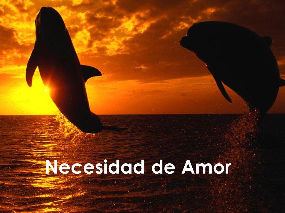 Necesidad de Amor