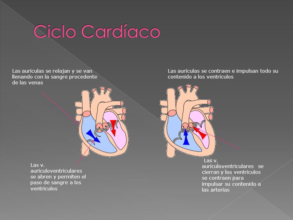 Ciclo Cardíaco Las aurículas se relajan y se van llenando con la sangre procedente de las venas.
