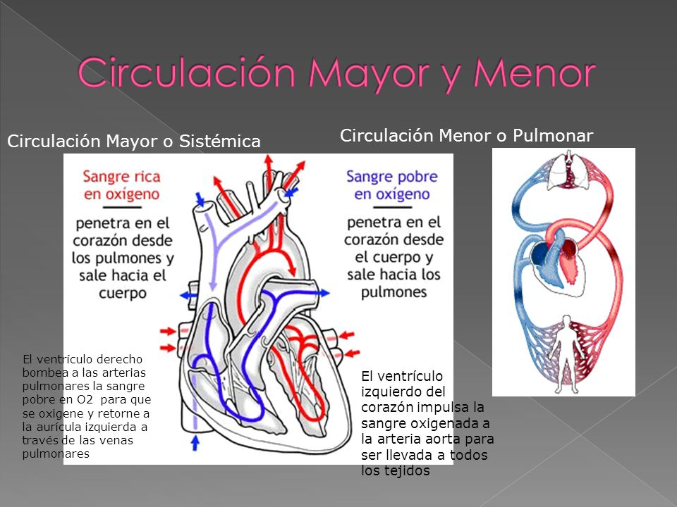 Circulación Mayor y Menor