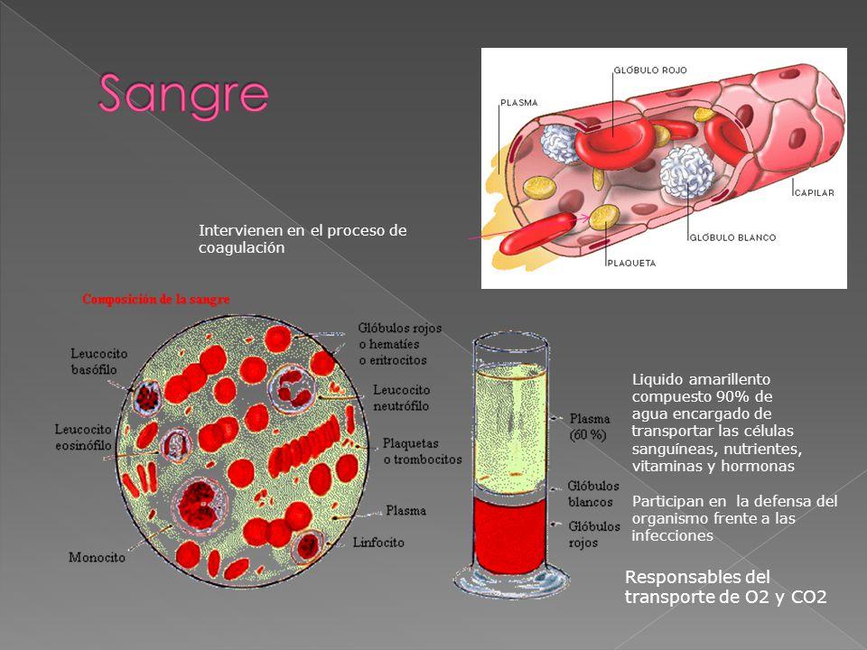 Sangre Responsables del transporte de O2 y CO2