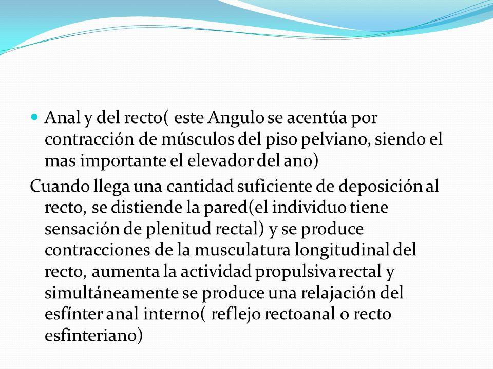 Anal y del recto( este Angulo se acentúa por contracción de músculos del piso pelviano, siendo el mas importante el elevador del ano)