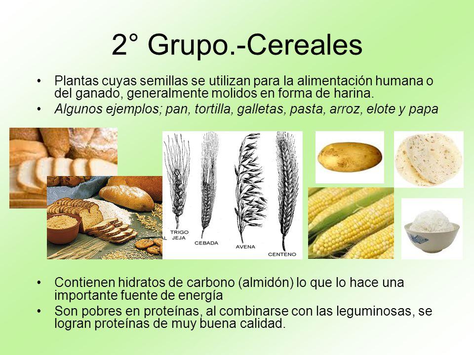 2° Grupo.-Cereales Plantas cuyas semillas se utilizan para la alimentación humana o del ganado, generalmente molidos en forma de harina.