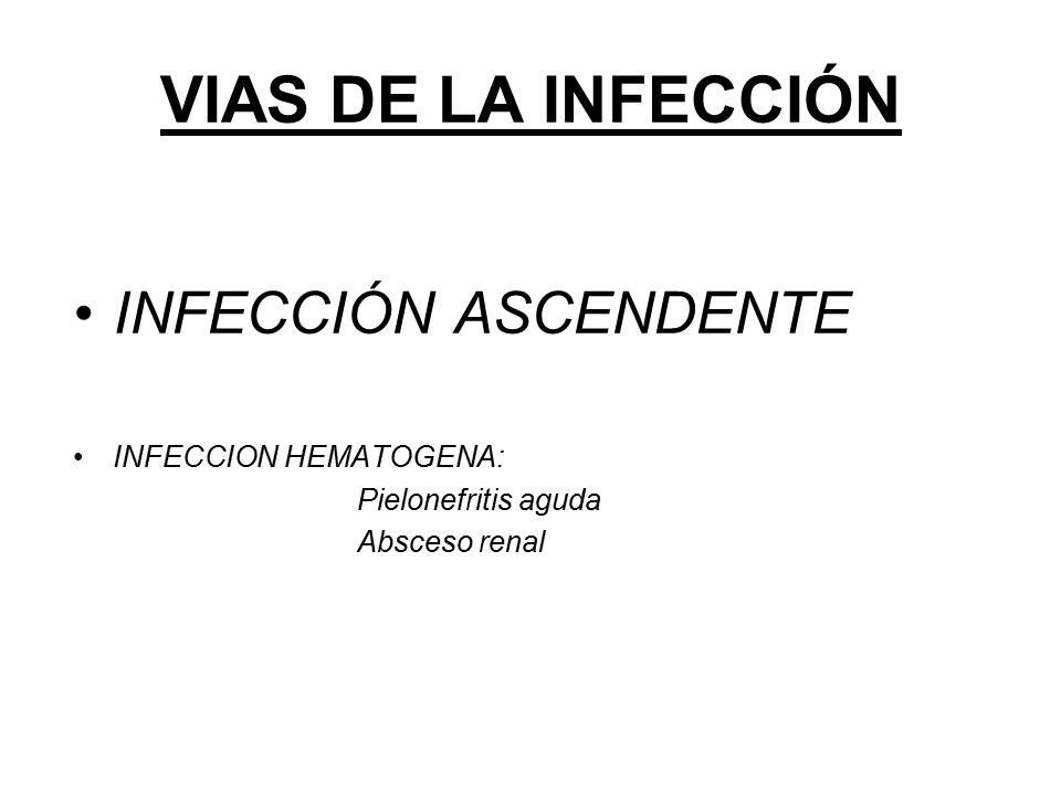 VIAS DE LA INFECCIÓN INFECCIÓN ASCENDENTE INFECCION HEMATOGENA:
