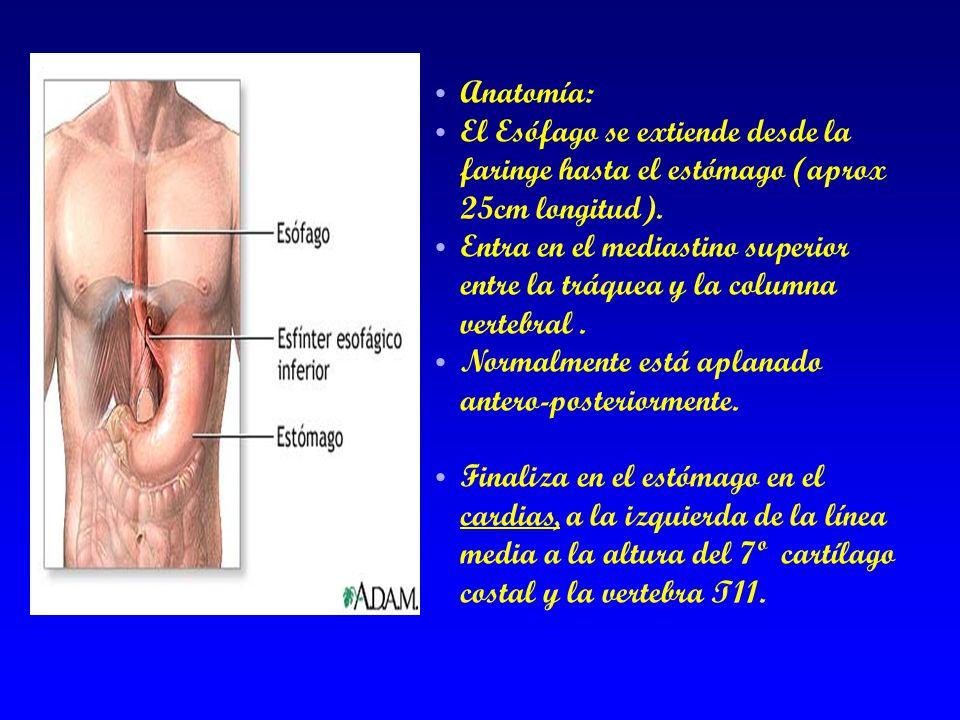 Anatomía: El Esófago se extiende desde la faringe hasta el estómago (aprox 25cm longitud).