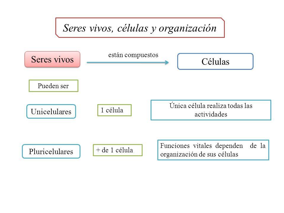 Seres vivos, células y organización