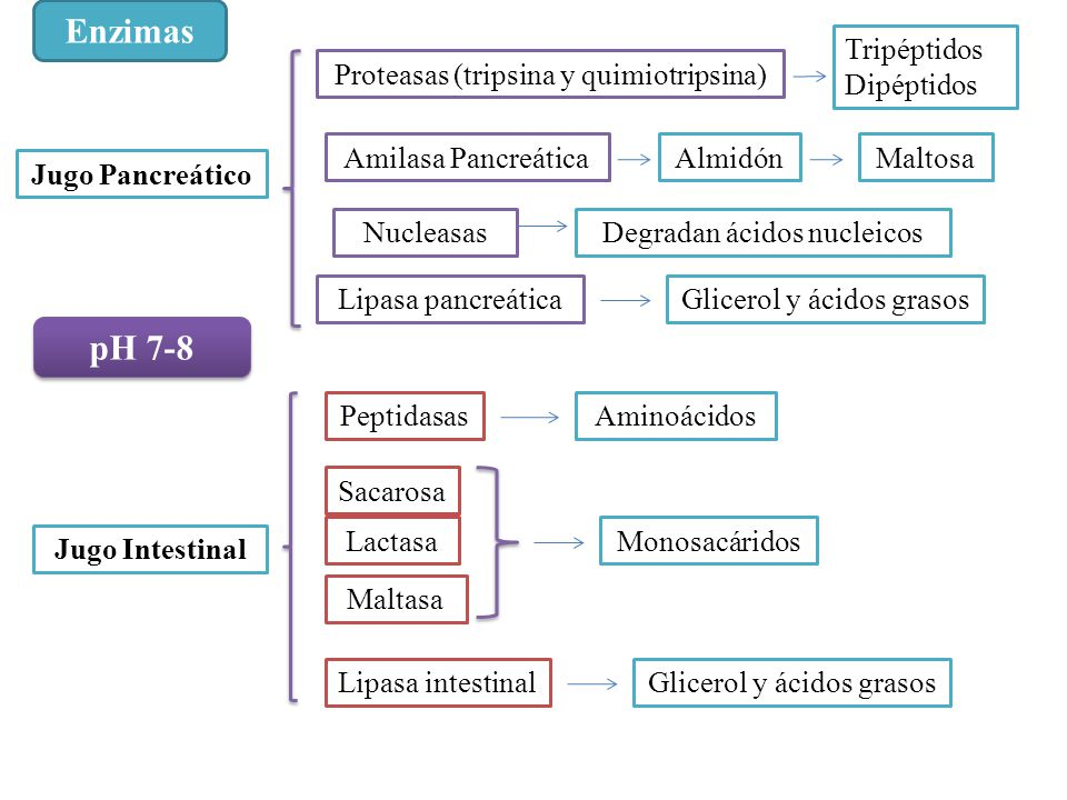 Enzimas pH 7-8 Tripéptidos Dipéptidos