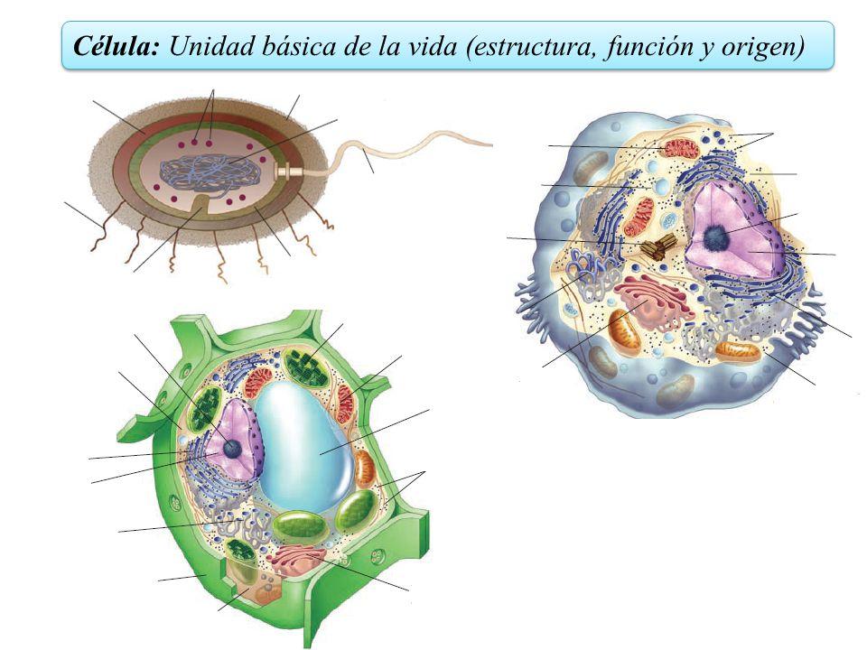 Célula: Unidad básica de la vida (estructura, función y origen)
